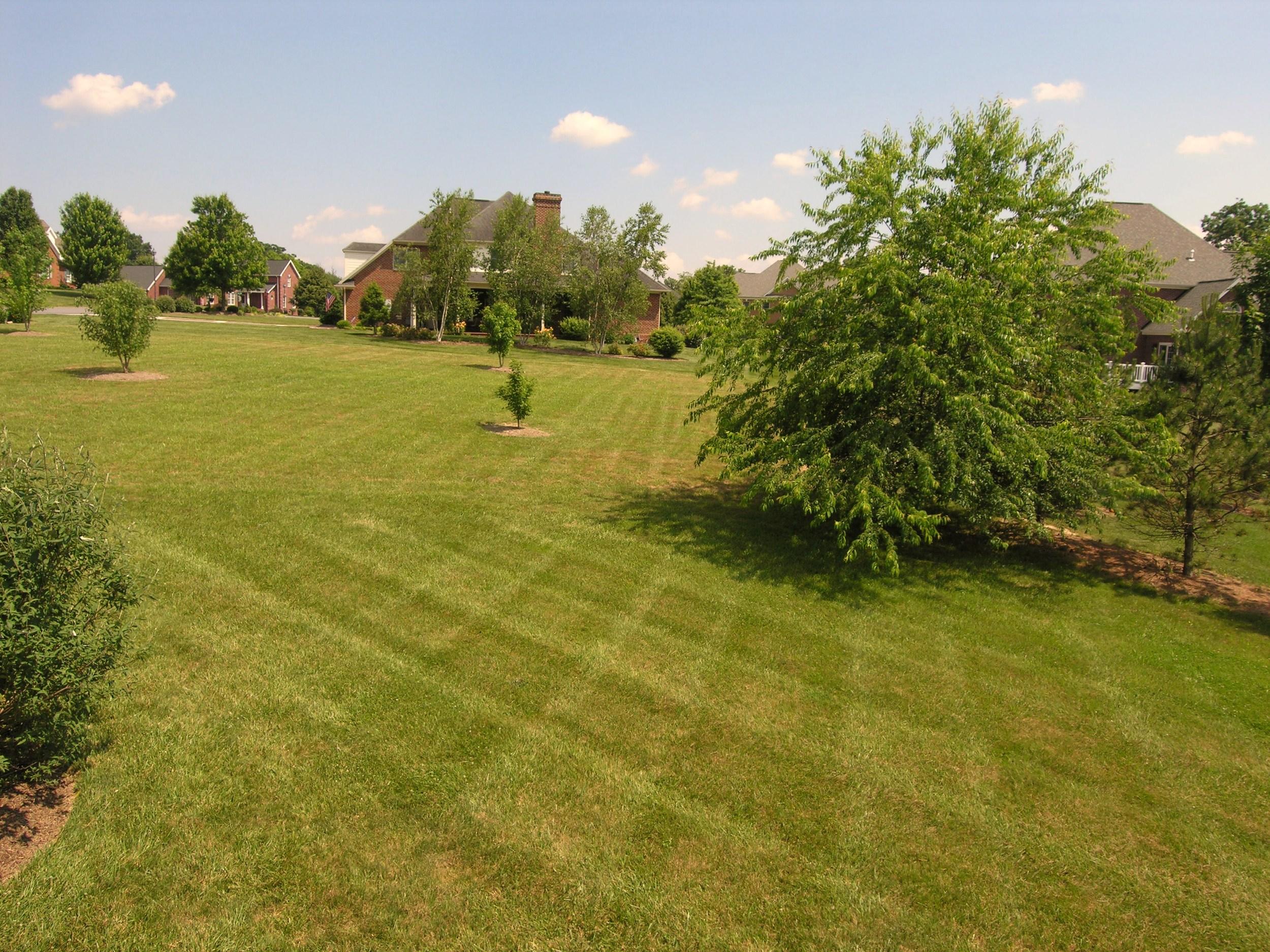 Back Yard-View 2.JPG