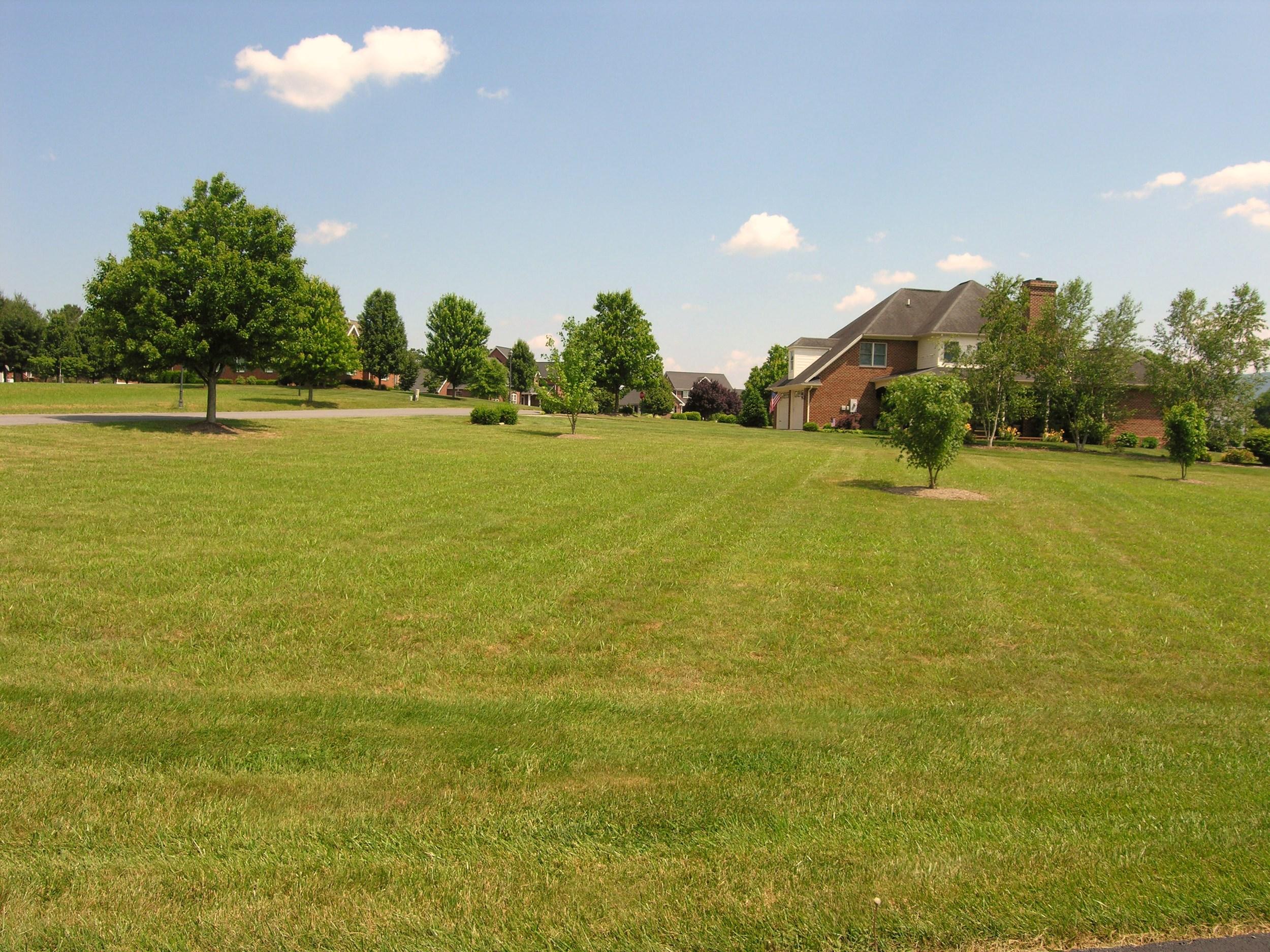 Back Yard-View 3.JPG