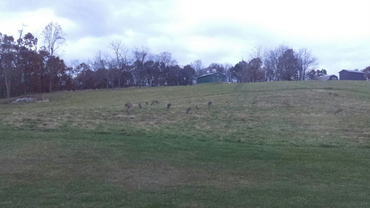 View behind the house-deer grazing.jpg