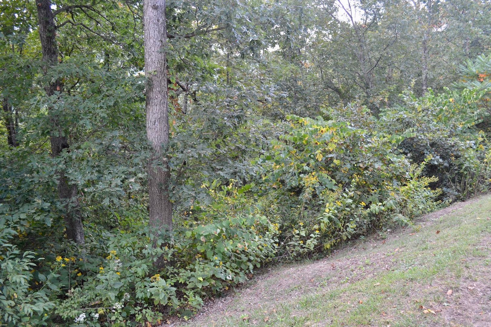 New River Oaks-Lot 54-4.jpg