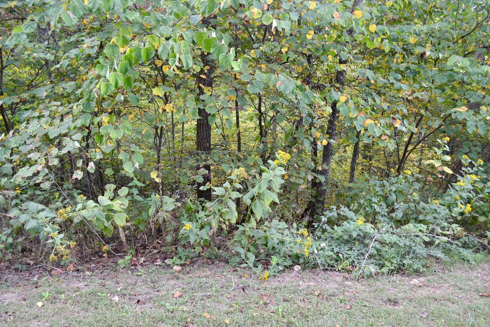 New River Oaks-Lot 54-6.jpg