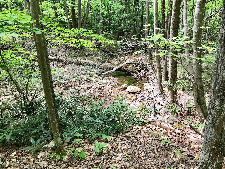 Rock Creek-3.jpg