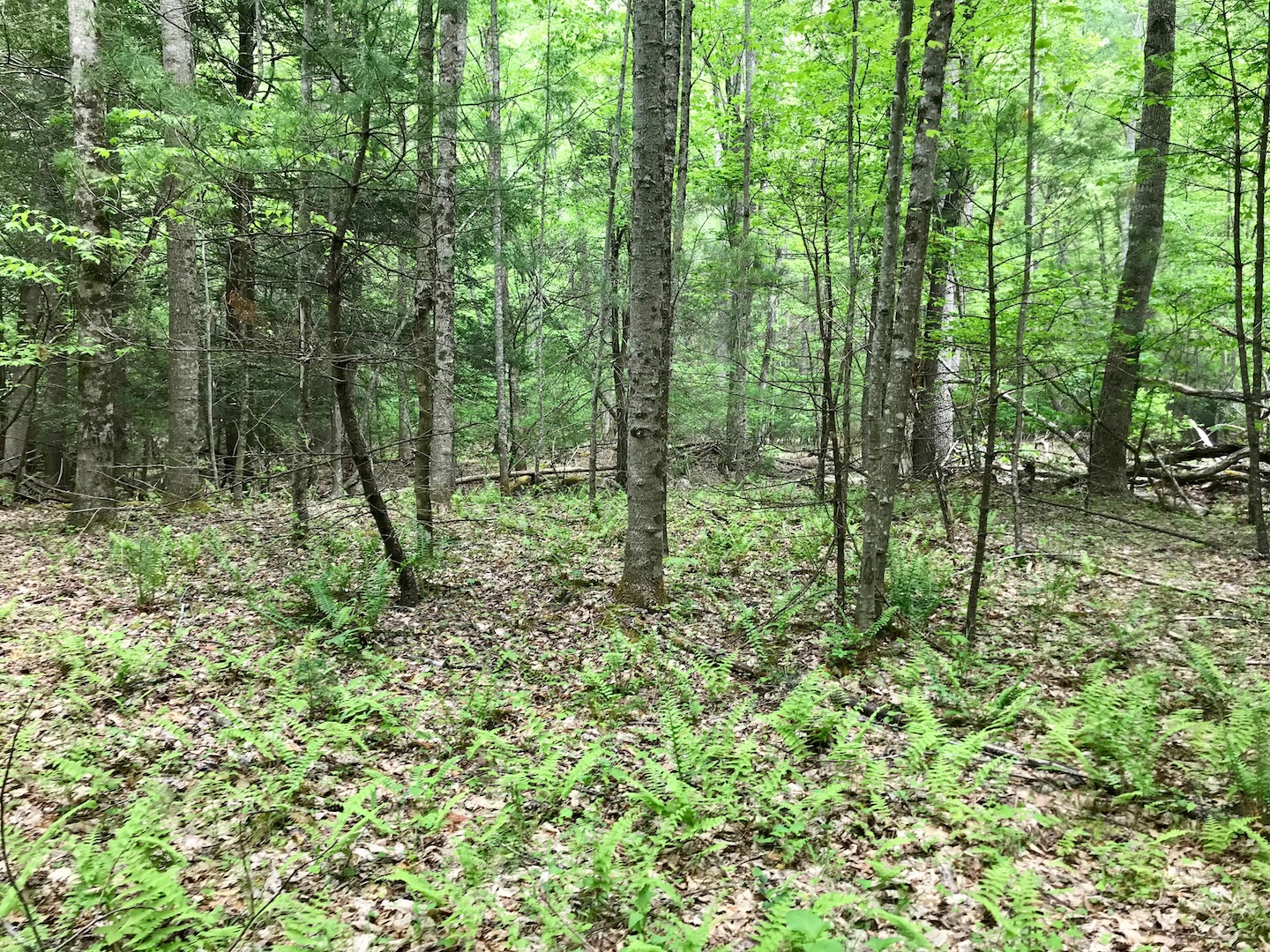 Typical Woods shot on 102 acres.jpg