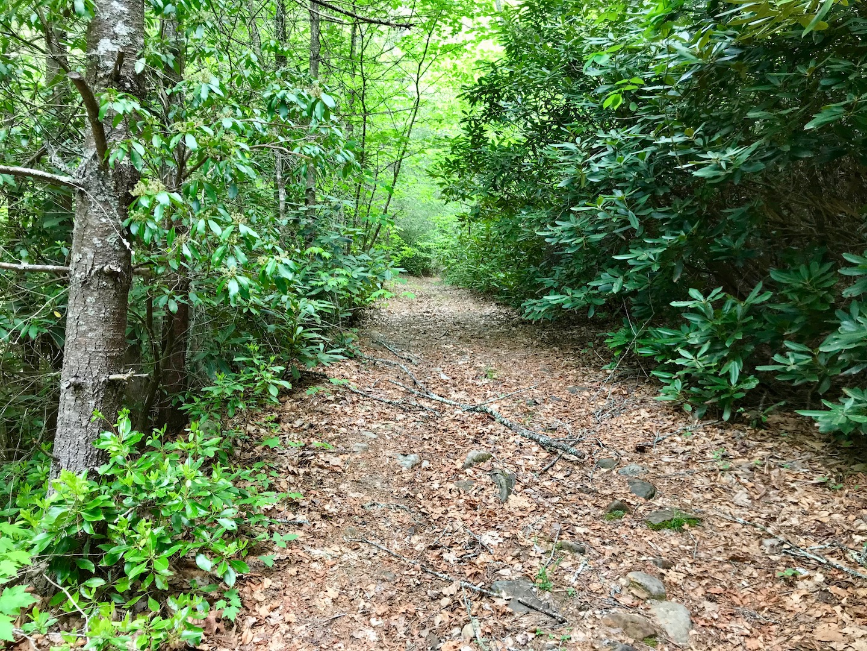 Entrance-path into property.jpg