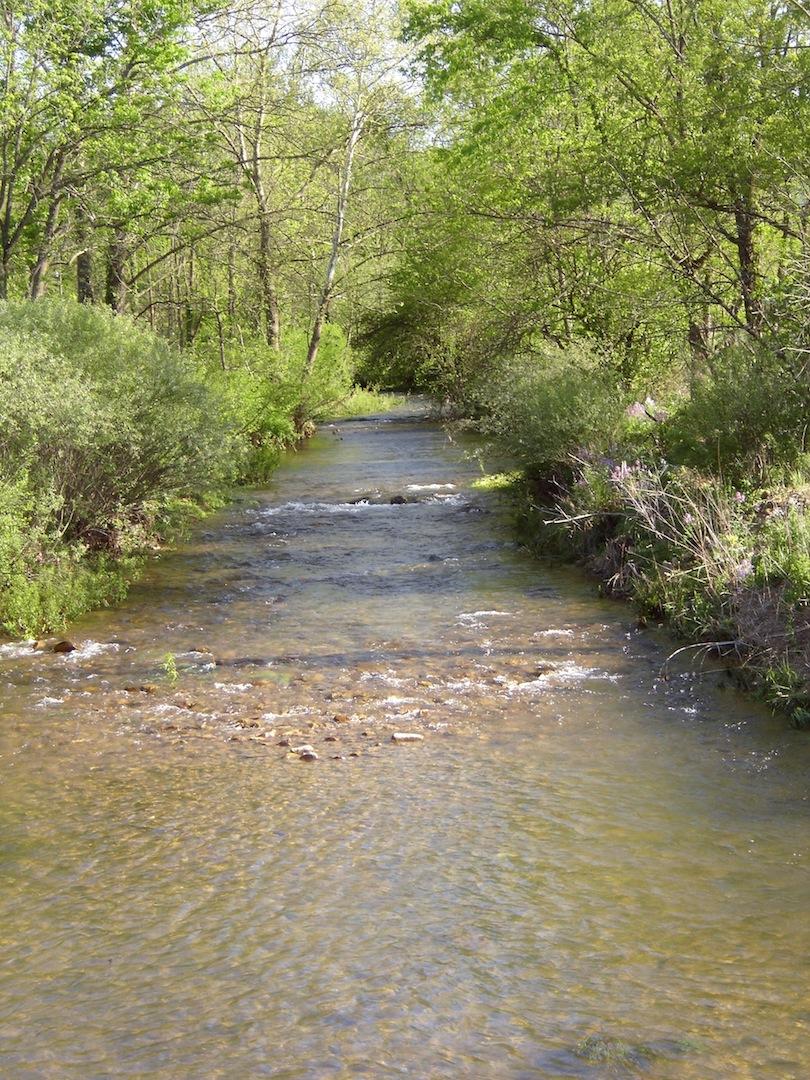 Creek-2.JPG