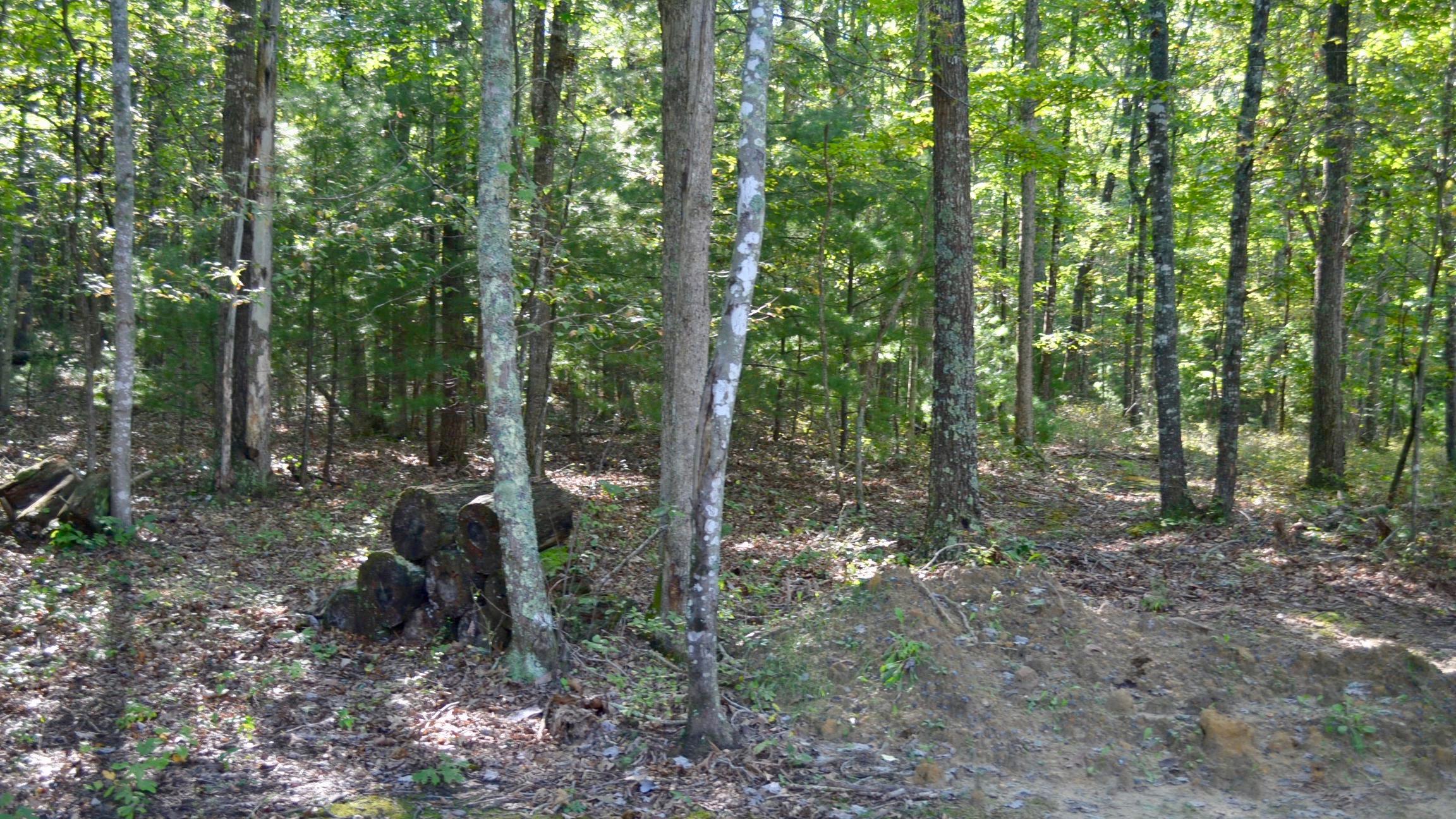 Woods-2.jpg