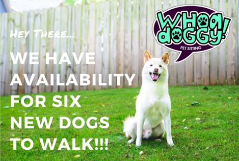dog_walking_avilability_atlanta_decatur.jpg