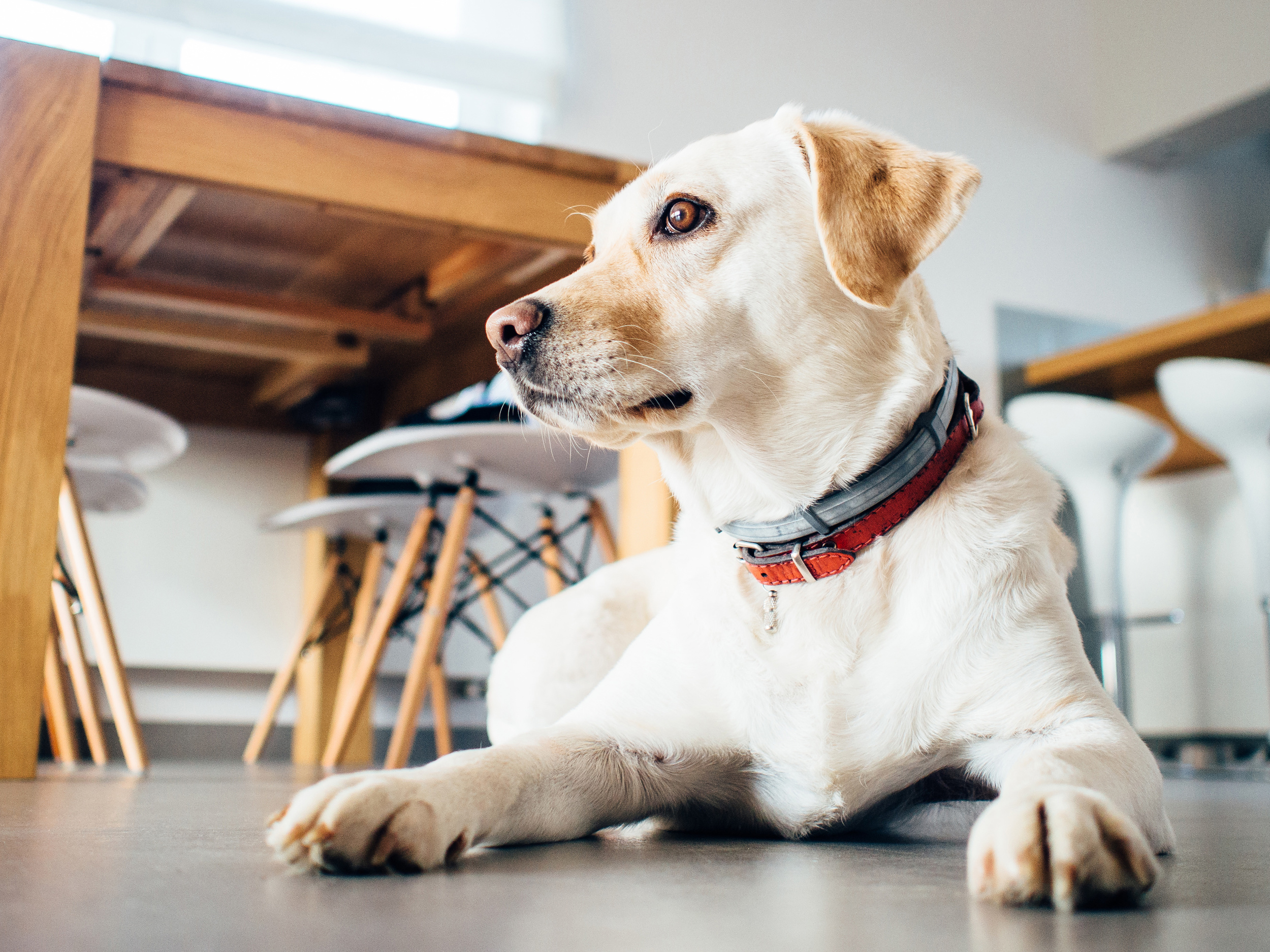 Pet Sitting costs can vary a great deal, which is why it's important to understand where those different costs come from.