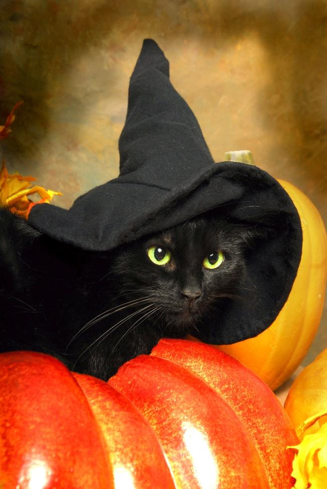 Black Cat Pet Sitter