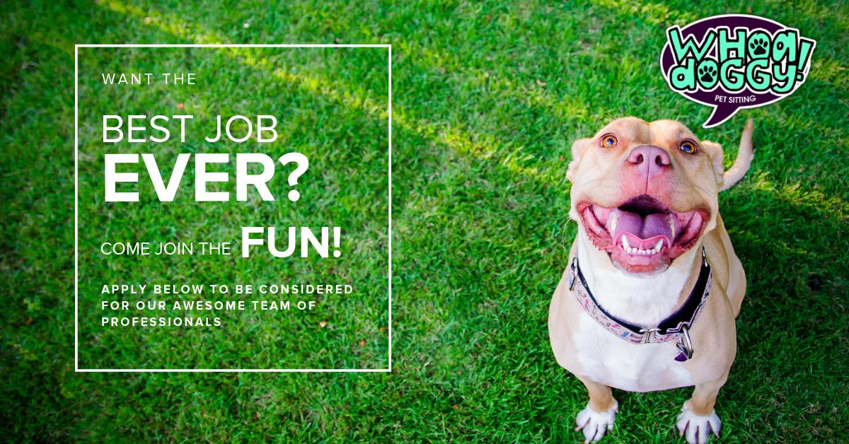 Pet Sitting Dog Walking Jobs Atlanta Decatur