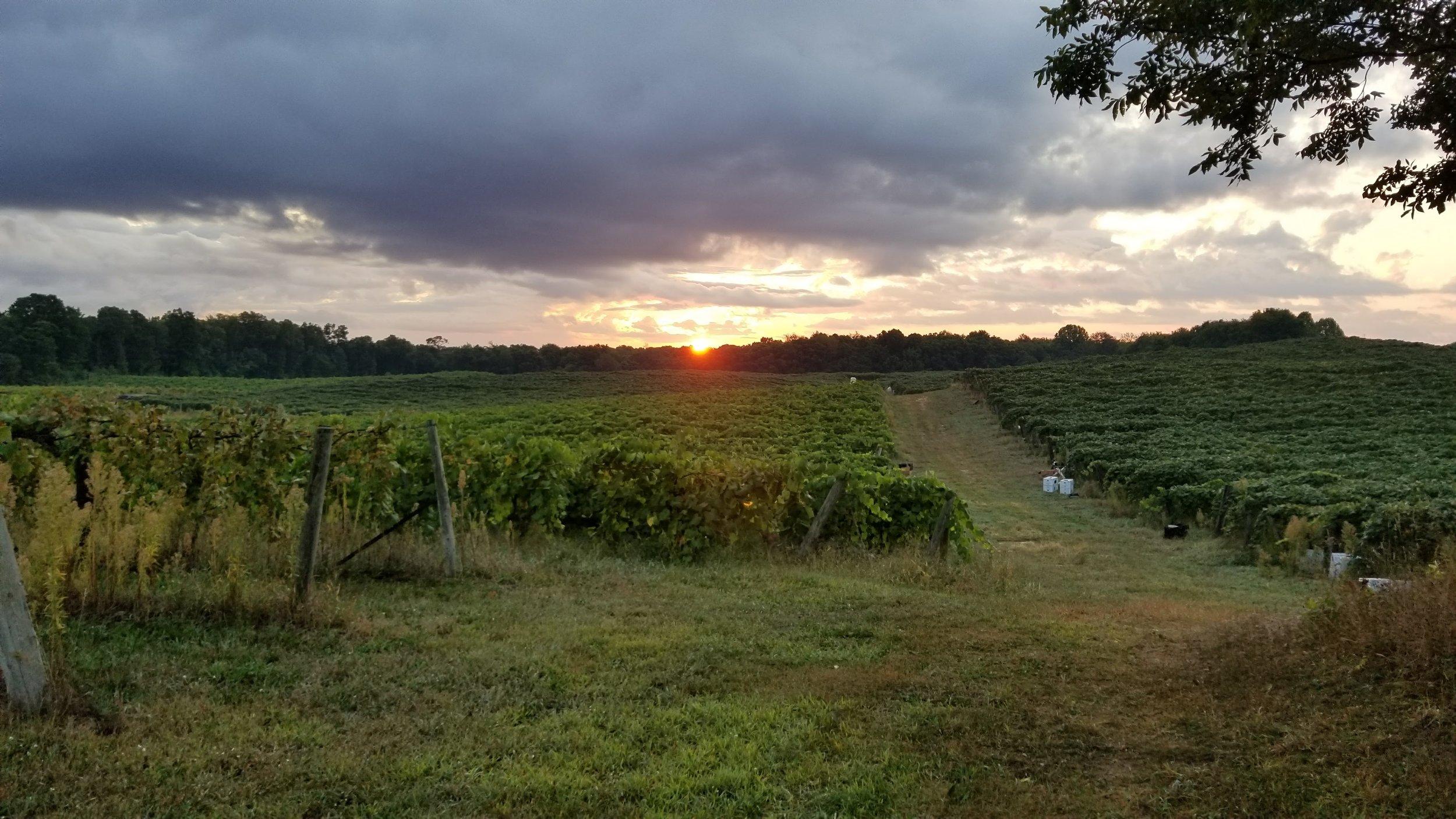 Vineyards, MI