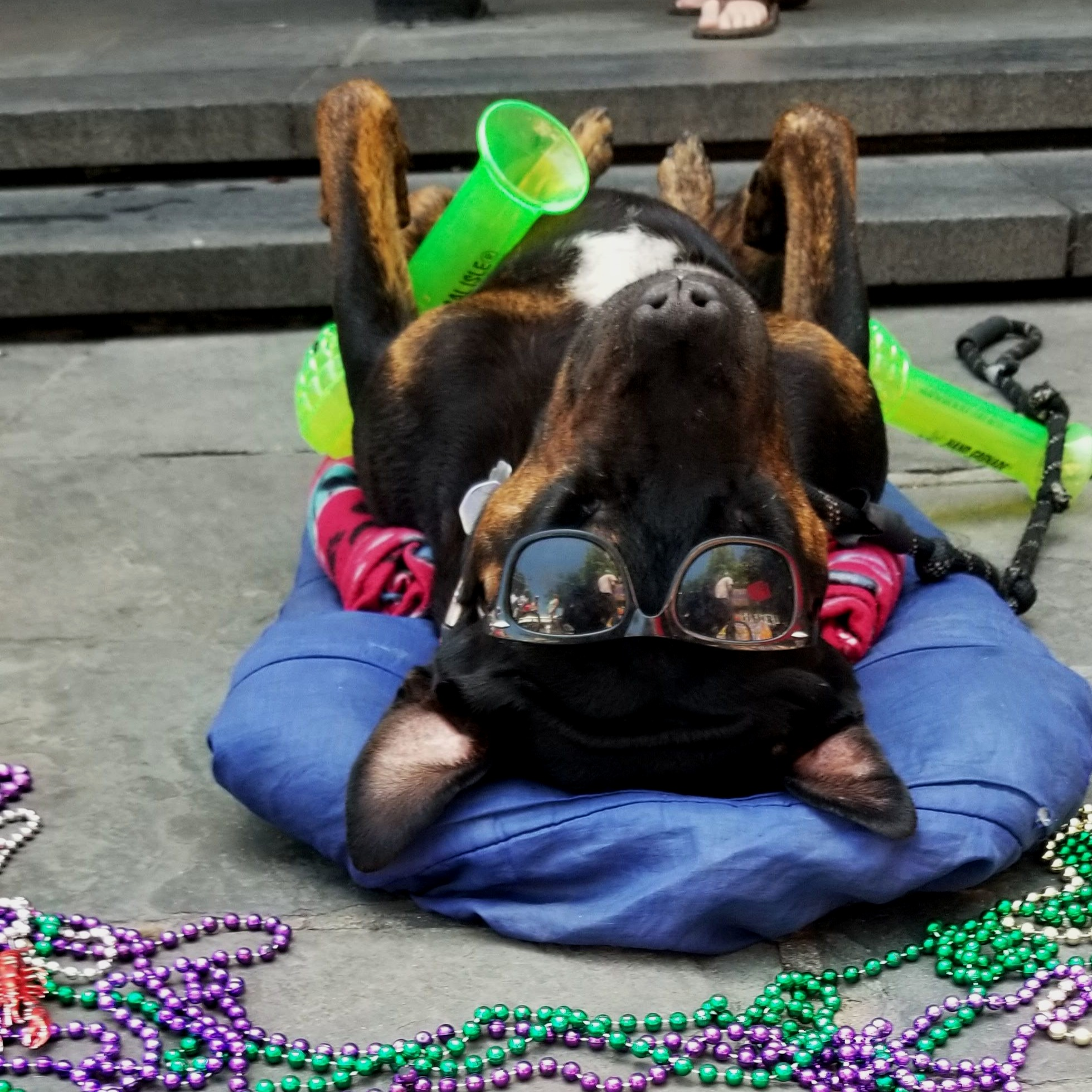 Party Animal Jackson Square