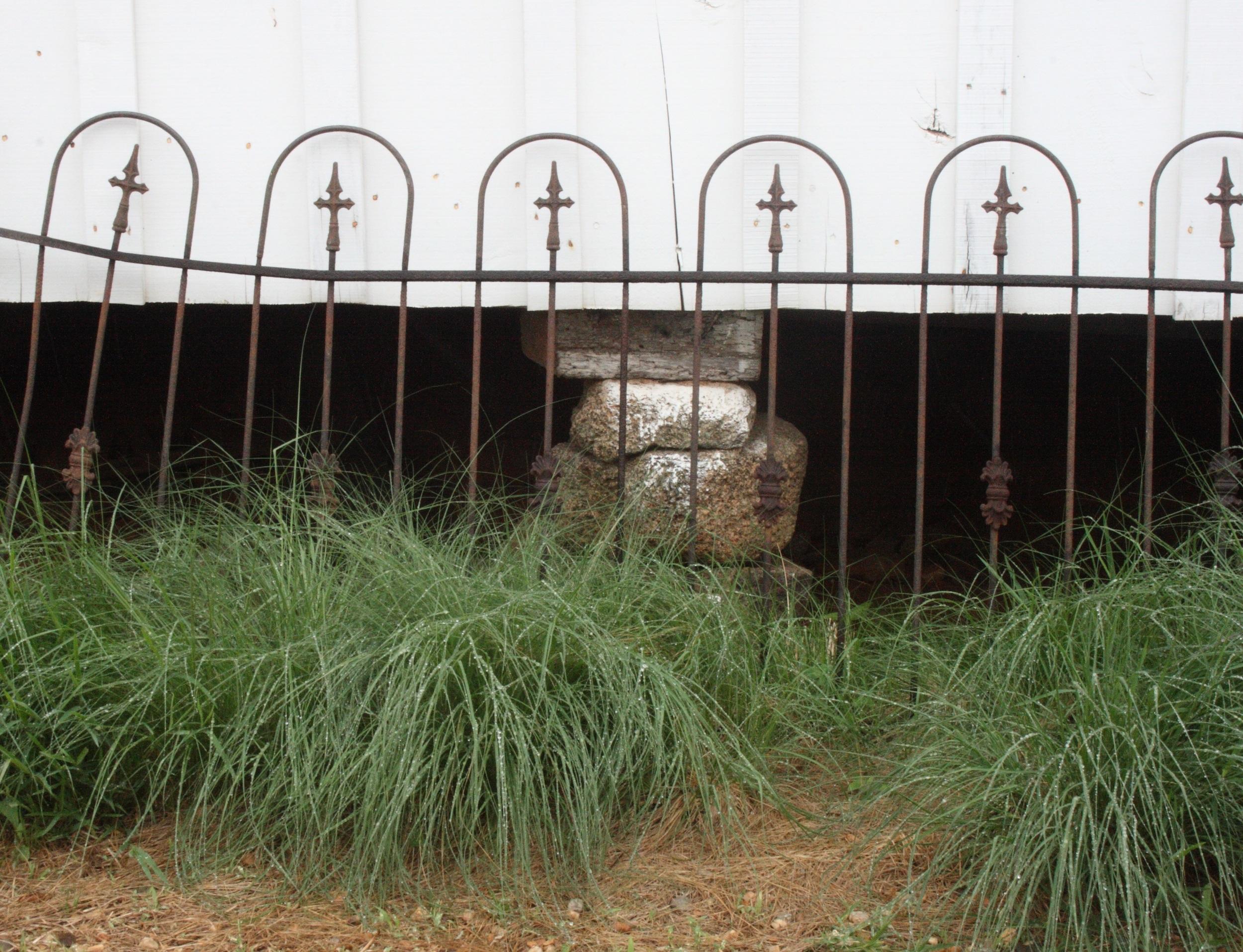 7Metal gates, love grass.JPG