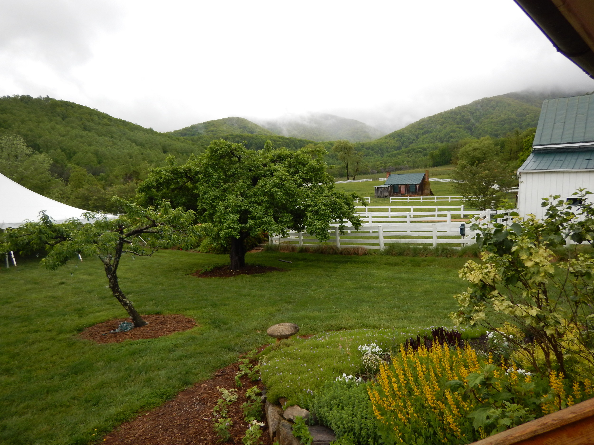 We have had several gorgeous weddings that the rain has steered clear for, but we are loving how all the rain has greened things up!