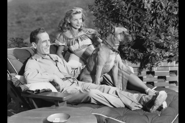 "Humphrey Bogart & Lauren Bacall (1946) The Boxer was a wedding present to Humphrey Bogart and Lauren Bacall, from Pulitzer-prize winning writer Louis Bromfeld, ""Harvey was really smart"" Bacall later recalled, ""he knew he wasn't allowed to get on the furniture so he would only put two paws on at a time, and he would sit between us if we had a fight."" Photographed by Scotty Welbourne"