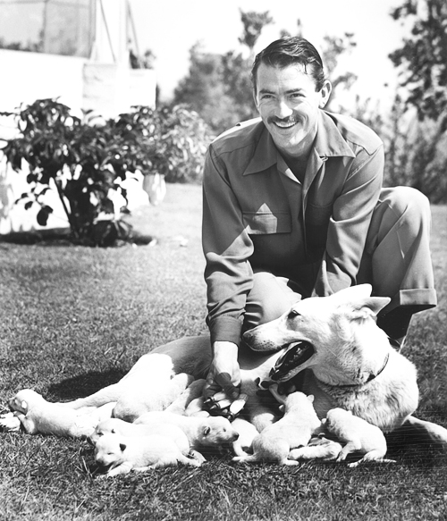 My favourite picture of the book. Gregory Peck (1949) He may have been one of the greatest leading men of his day, but at home in Pacific Palisades it was his German Shepherd Slip who was the star of the show when she gave birth to thirteen puppies. Peck was making  THE GUN FIGHTER  at the time, but rush home to assist with all the drama.