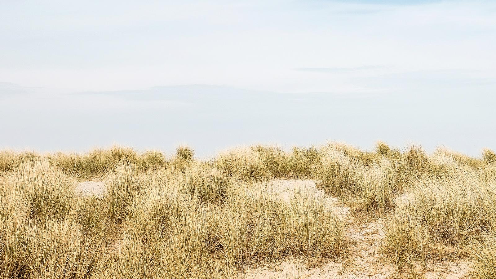 dune-4.17.19.jpg