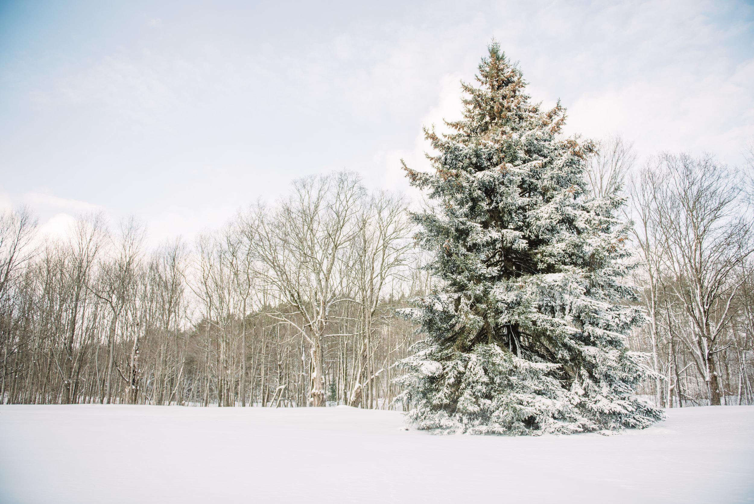 Christmas Blog-7.jpg