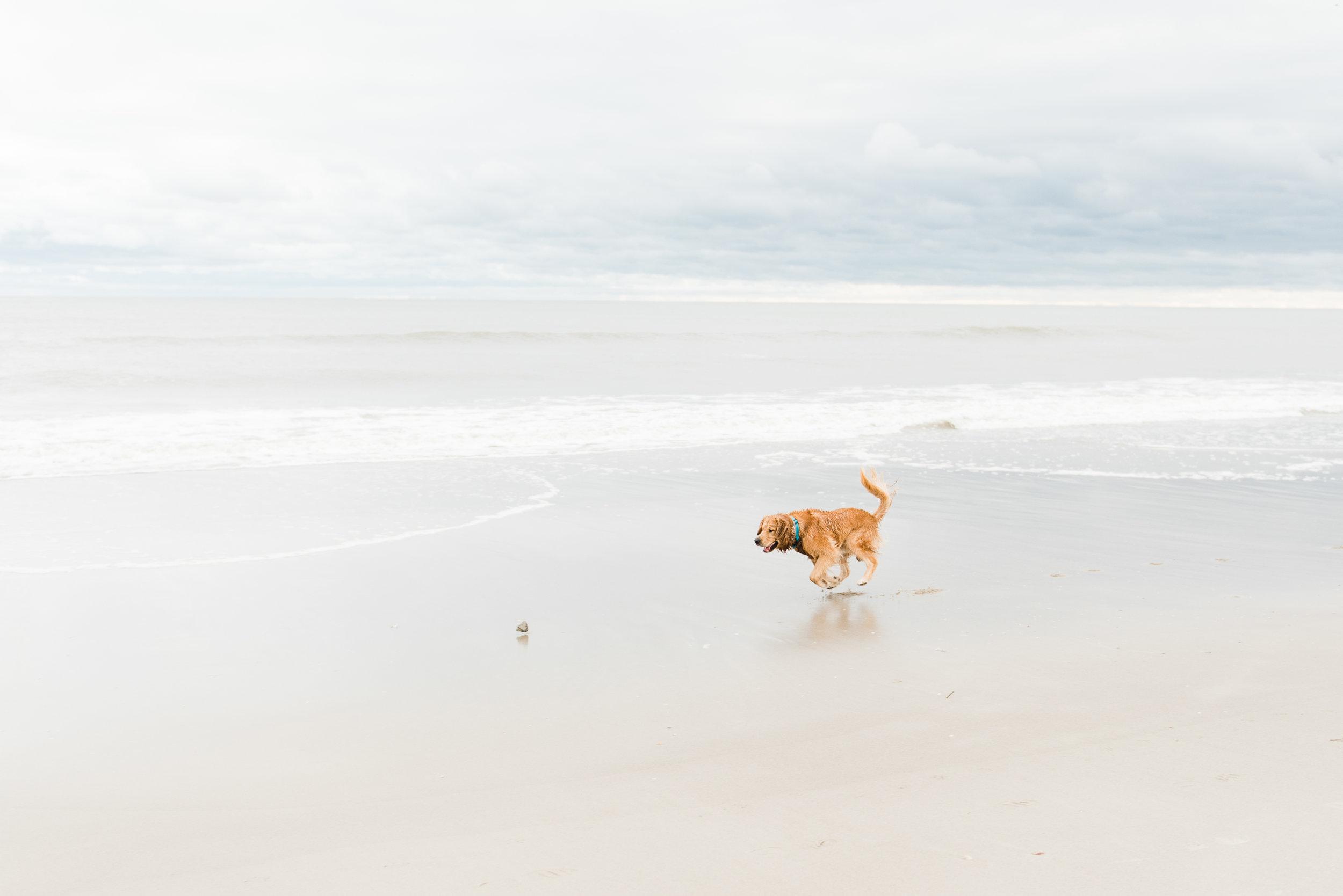 Jordan Dog-2.jpg