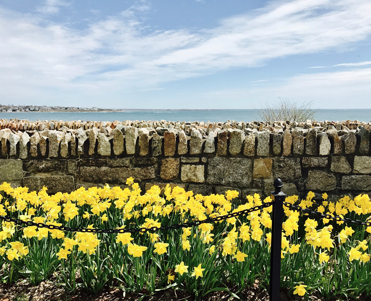 Daffodils_Cliff Walk_The Chanler.jpg