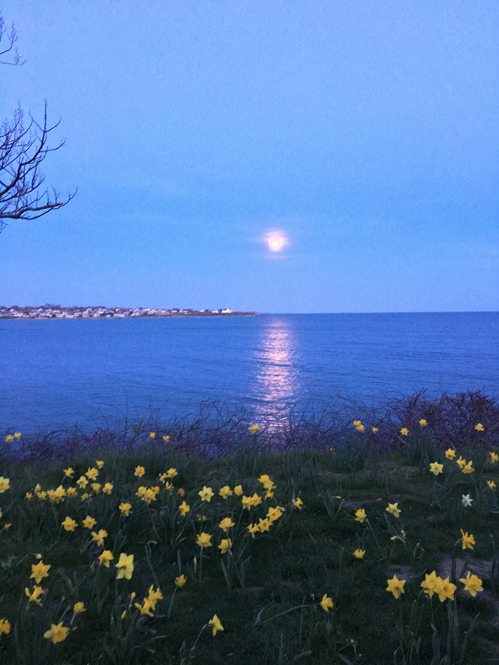 Daffodils_Full Moon_The Chanler.jpg