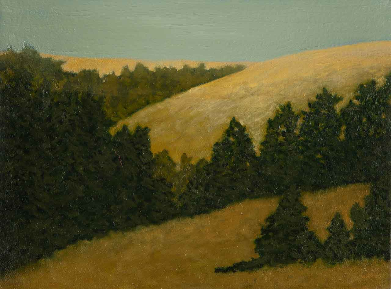 """Redwoods in Marin County"""