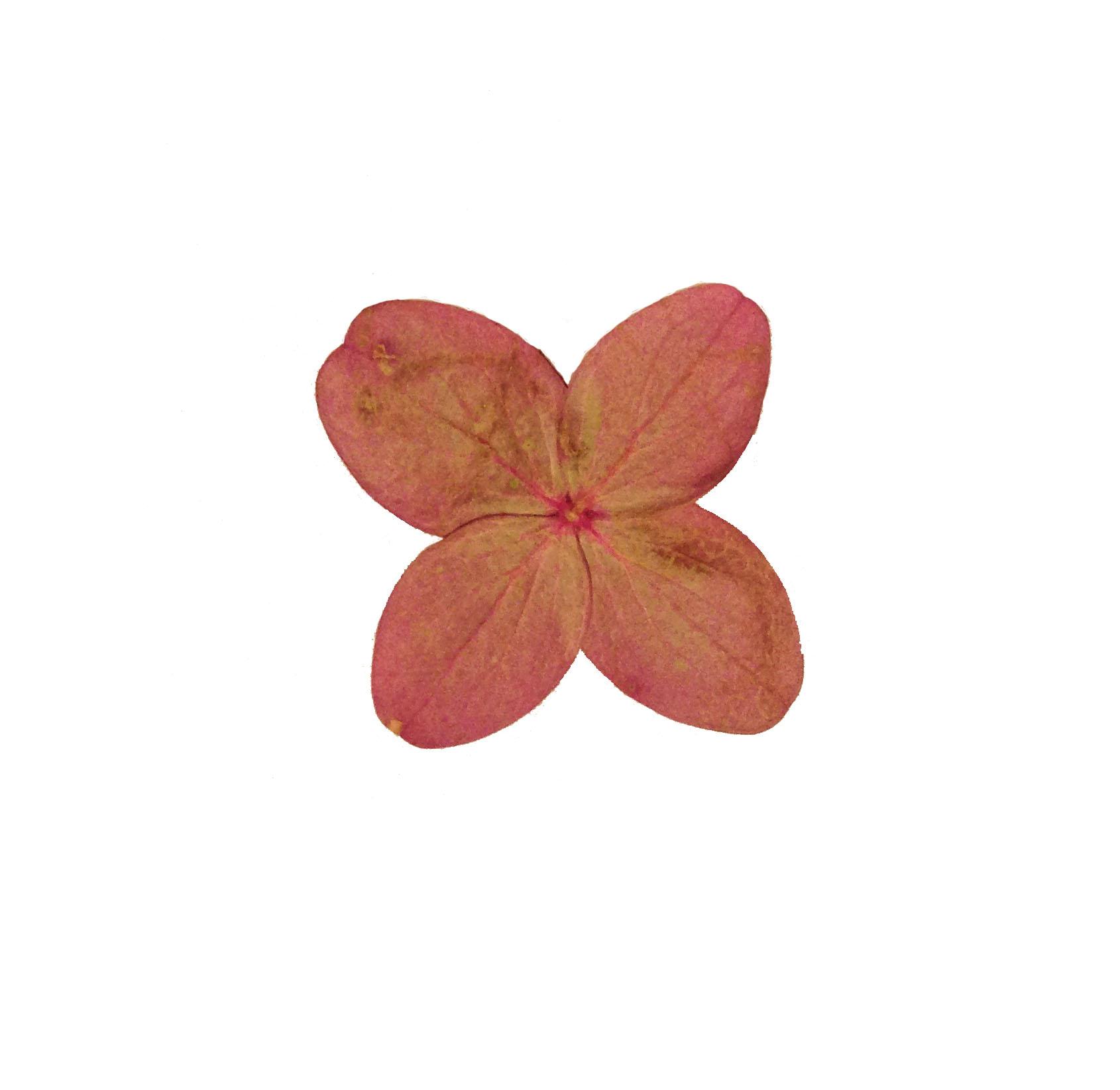 Flower6.jpg