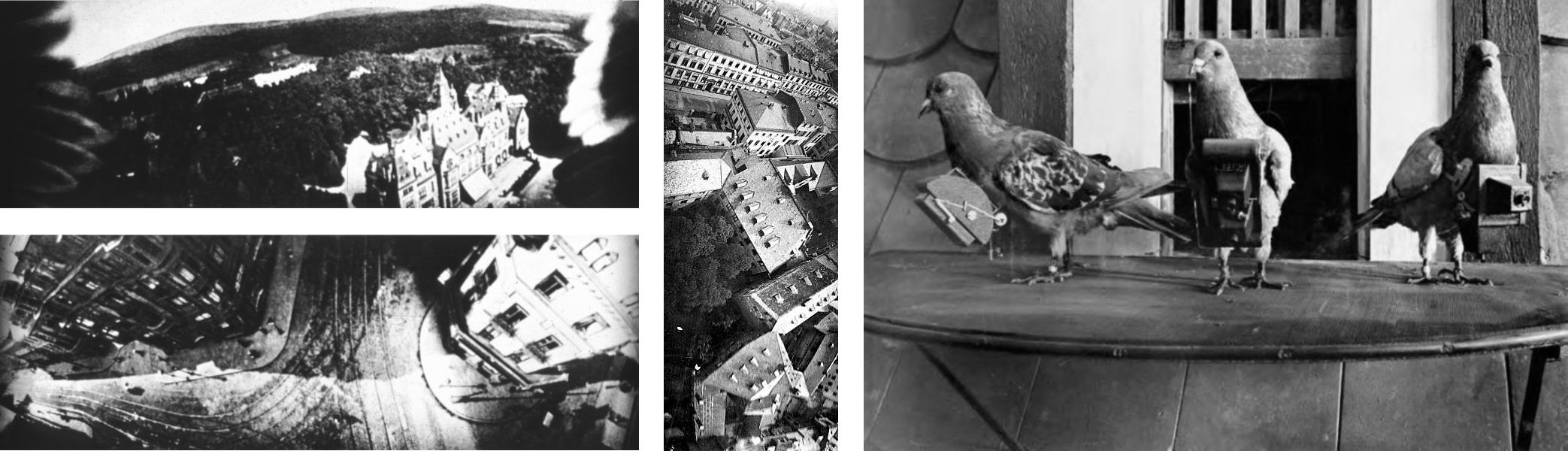 Neubronner's pigeons.
