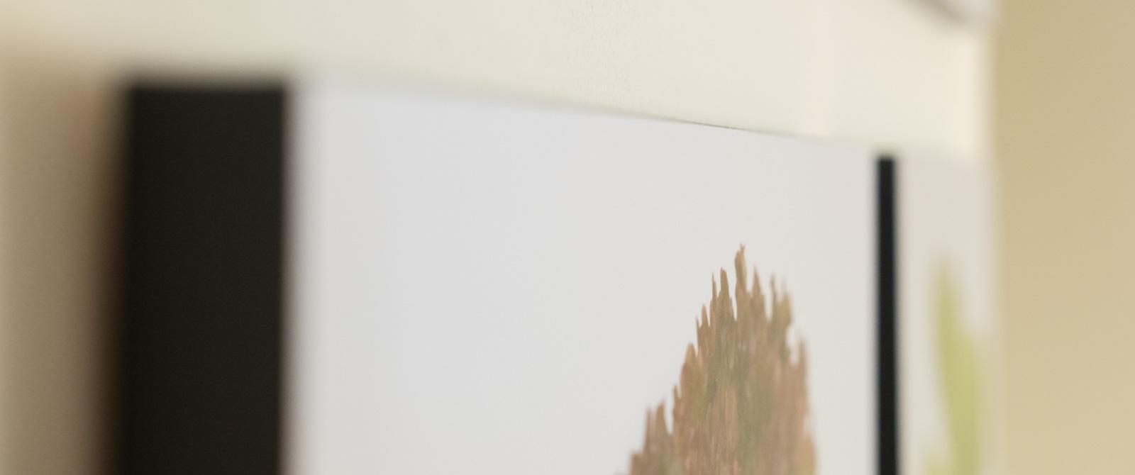 WallLettuce-4.jpg
