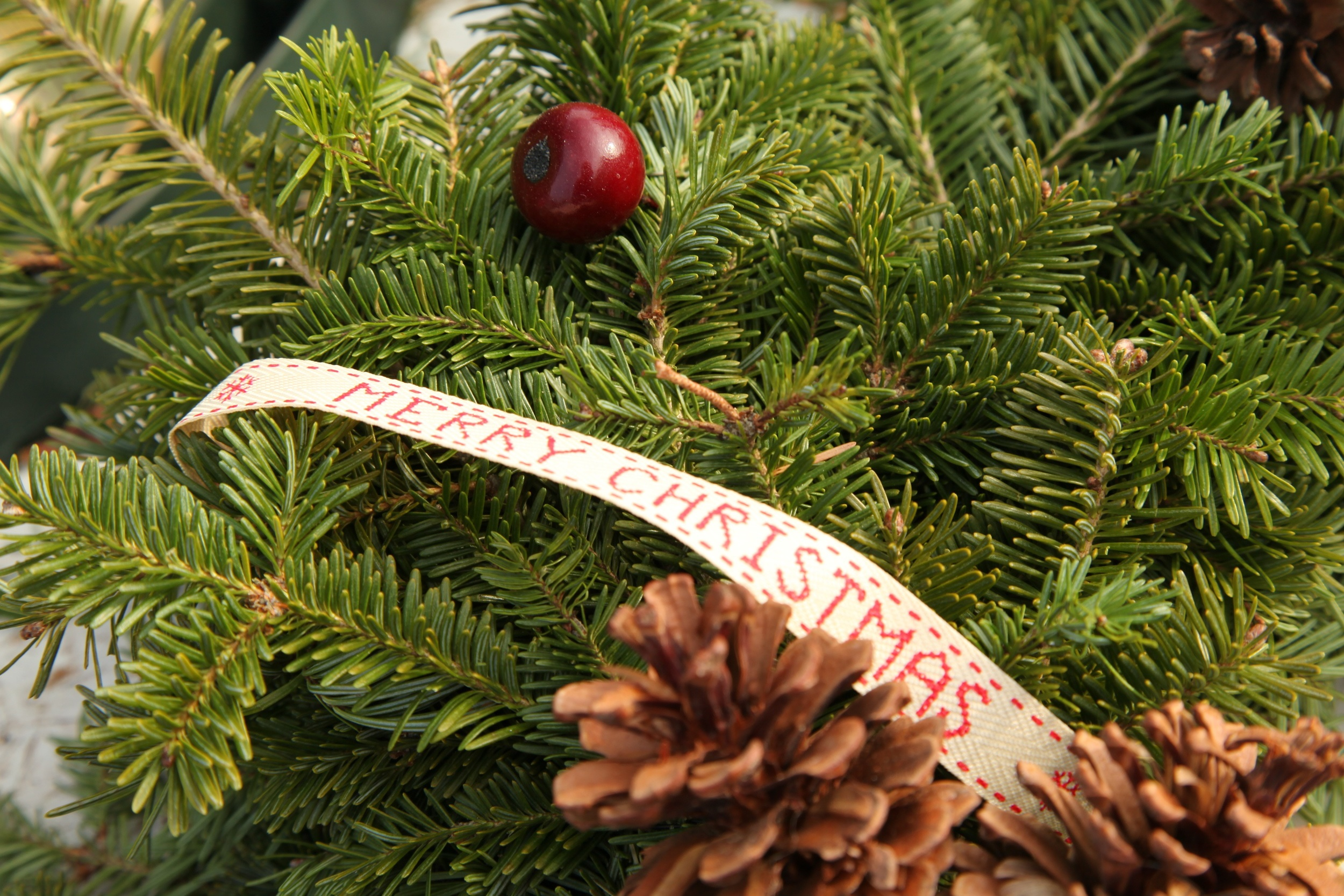 Close up of a wreath's ribbon.jpg