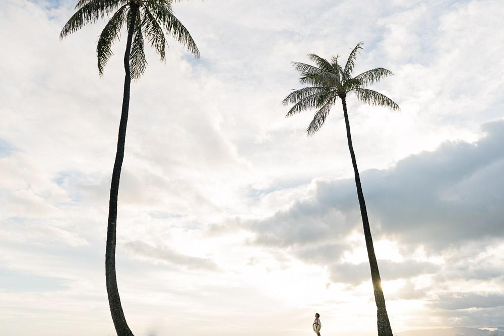 palm tree oahu