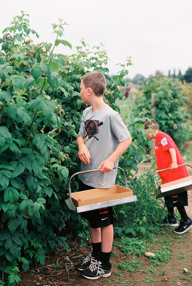 summer fruit picking