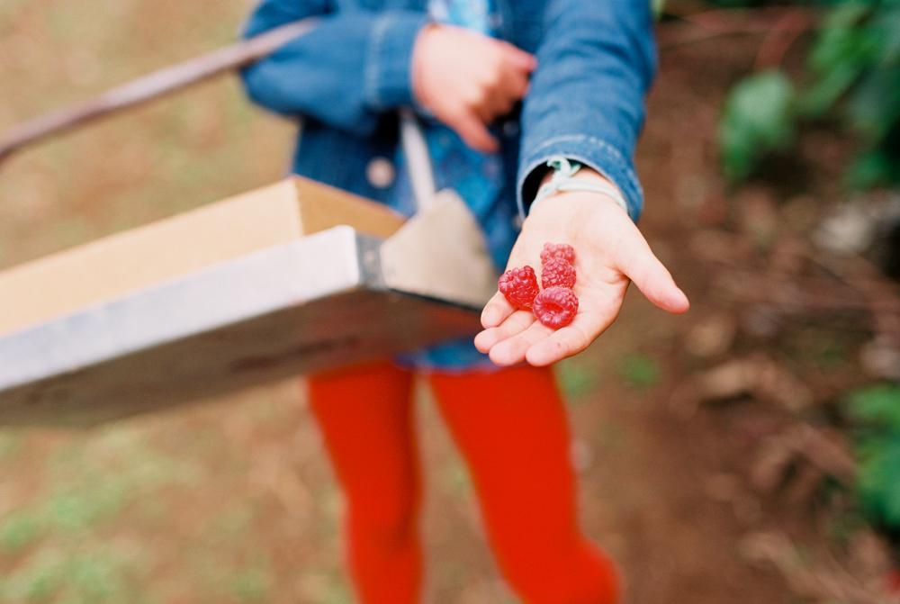 summer fruit picking Kelly Rowie