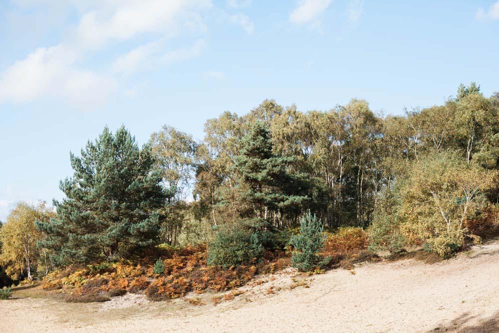 Norfolk in the Autumn