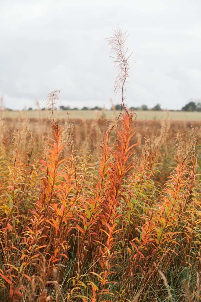 Norfolk fields in Autumn