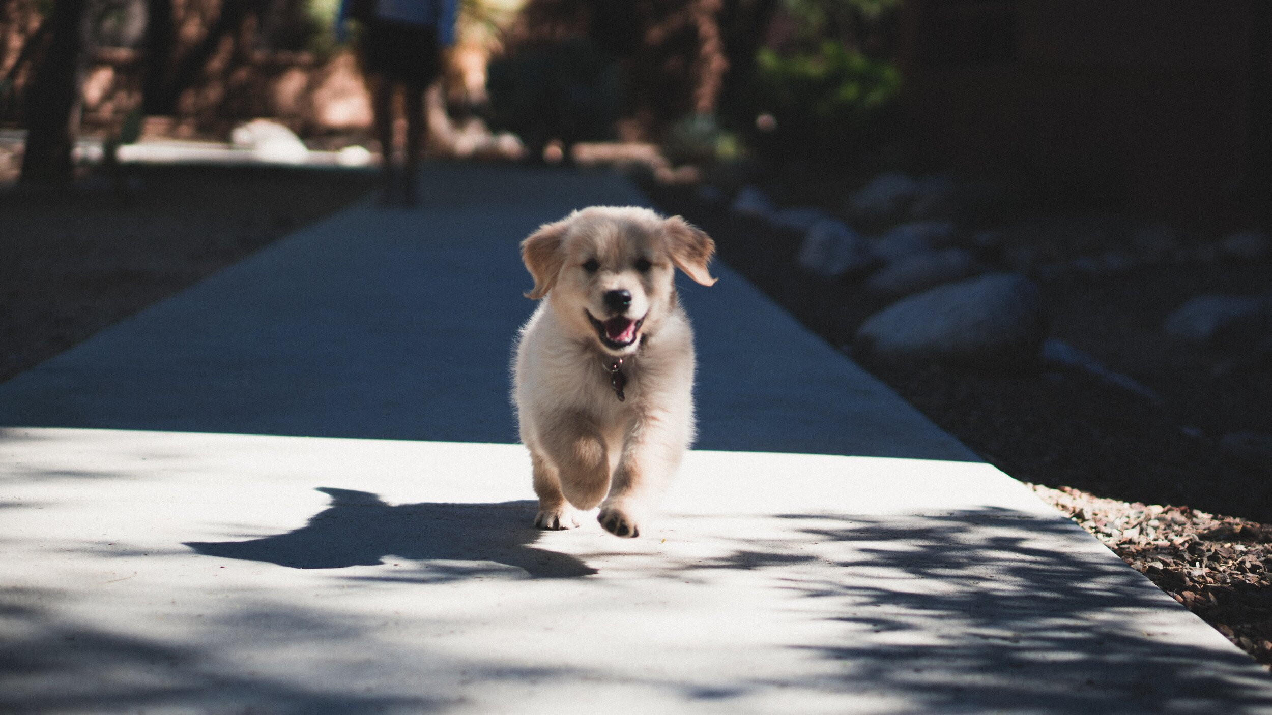 How to Socialize Your Puppy During Social Distancing! — The Puppy Academy