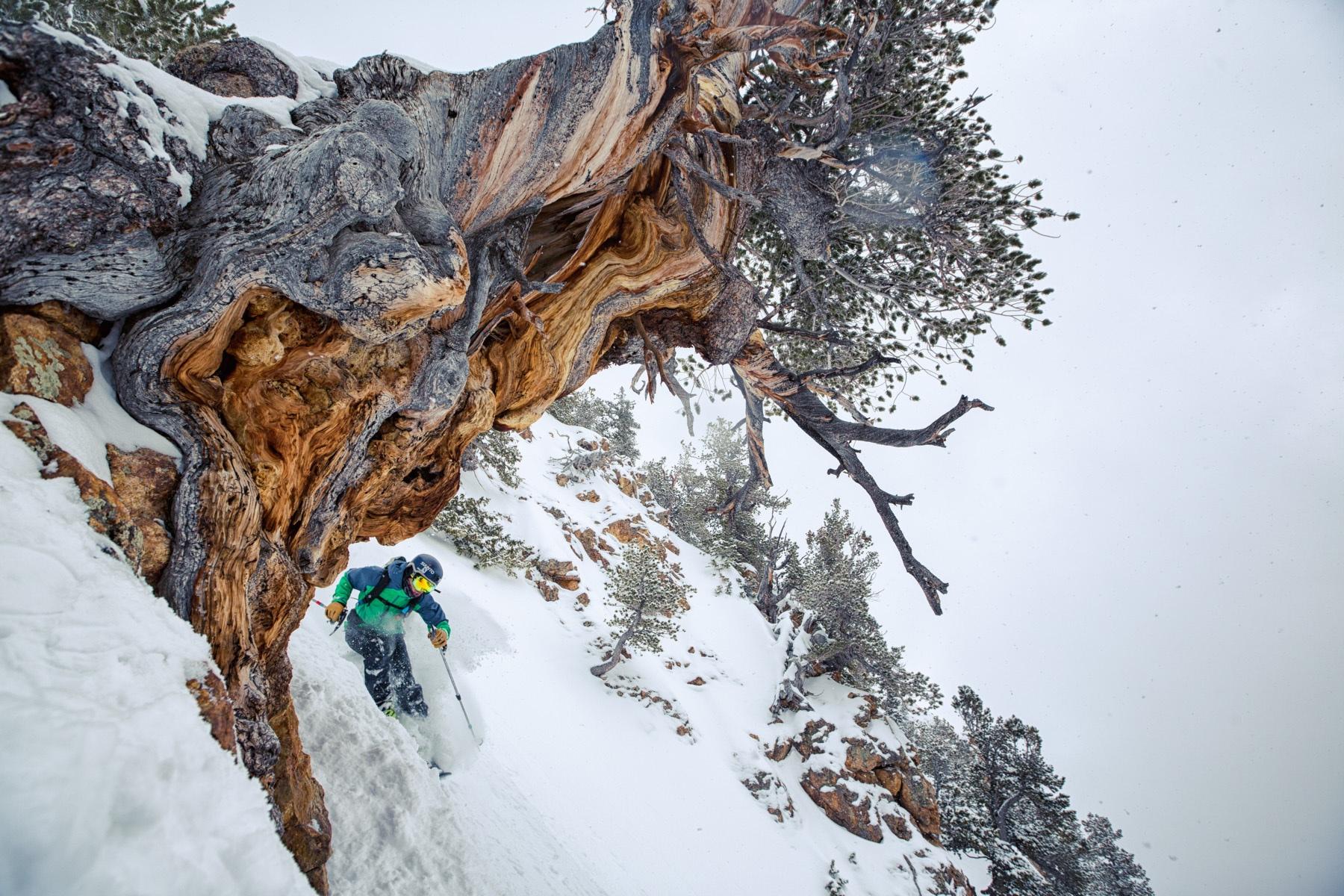 photo  Jim Harris  location  Wasatch Mountains, Utah