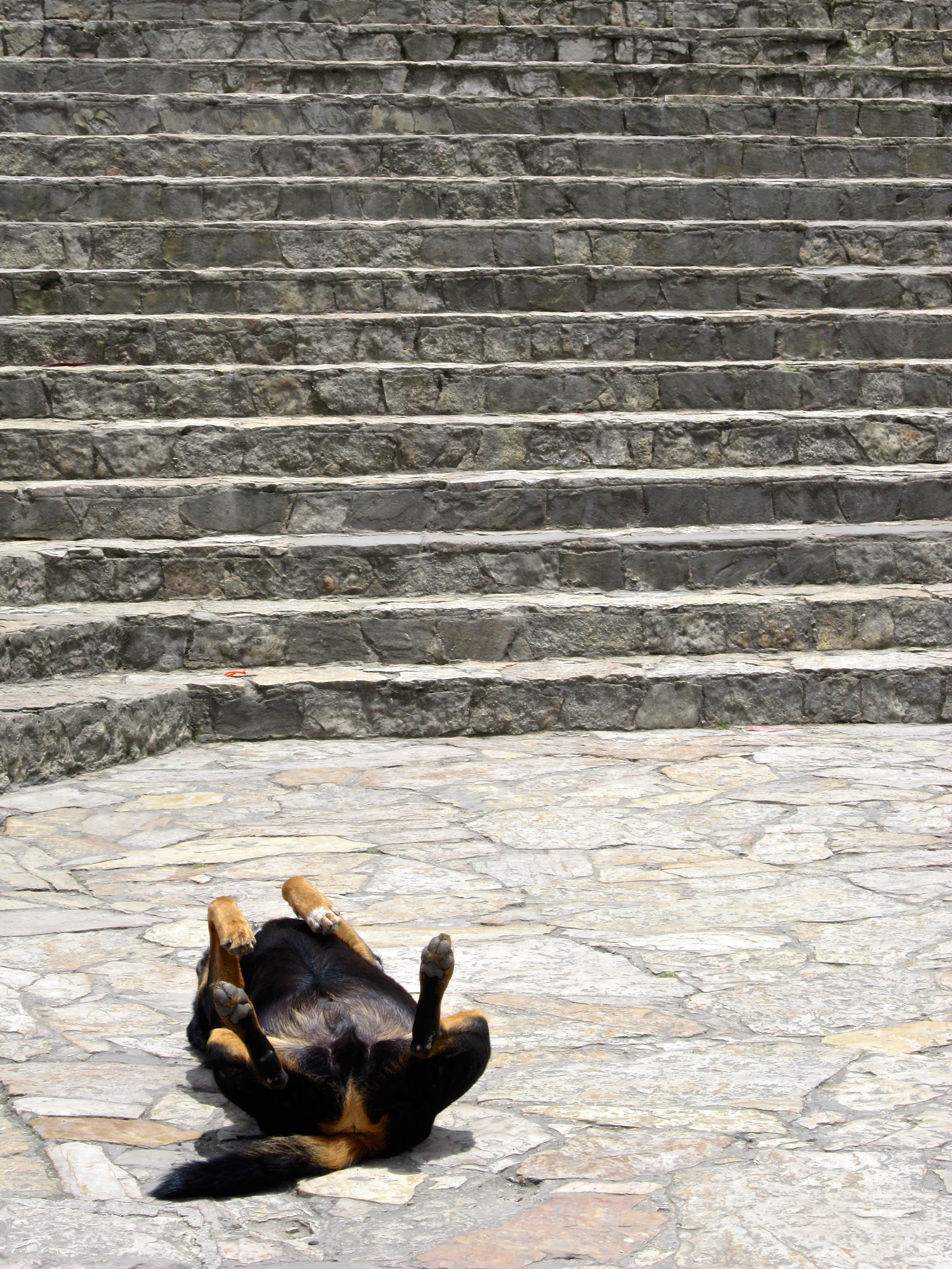 Fact- Colombian dogs have miniature legs that stick out of their backs, and are often seen moving about upside-down..jpg