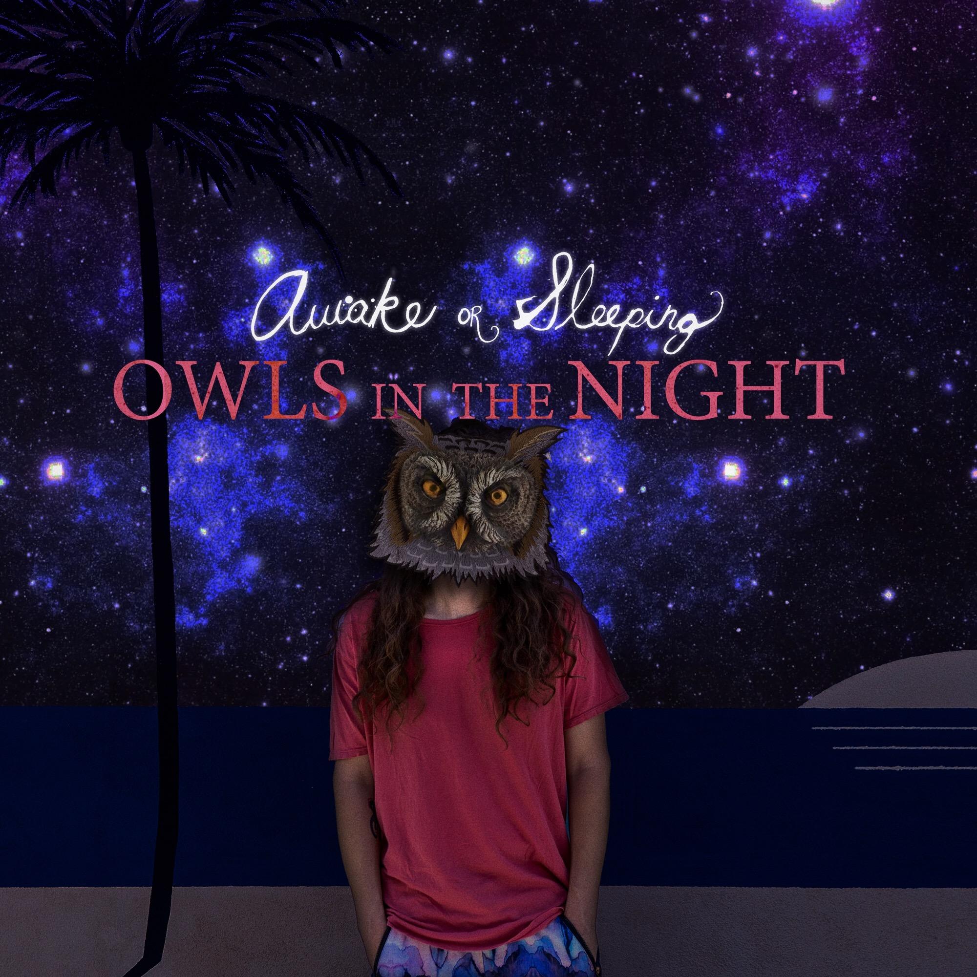 Awake-or-Sleeping-Owls-in-the-Night.JPG