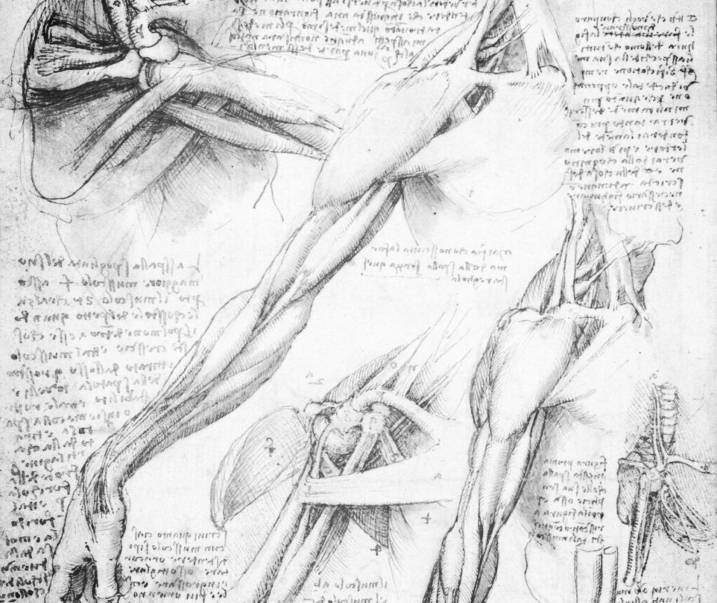 da-vinci-anatomy-slide-5-1024x861.jpg