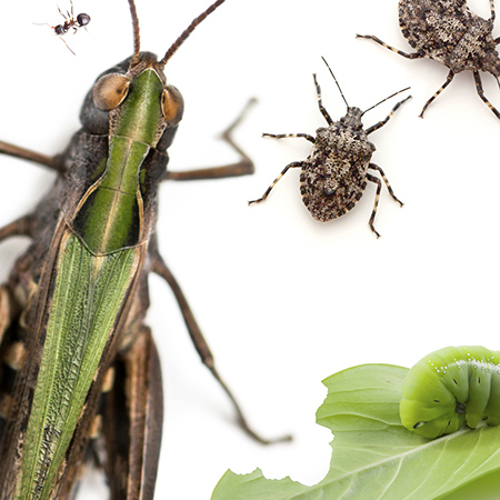 habitat-insects.jpg