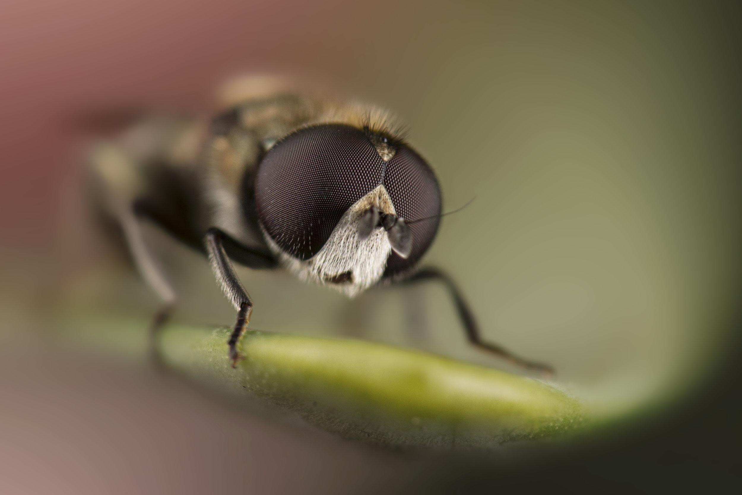 royal-fly.jpg