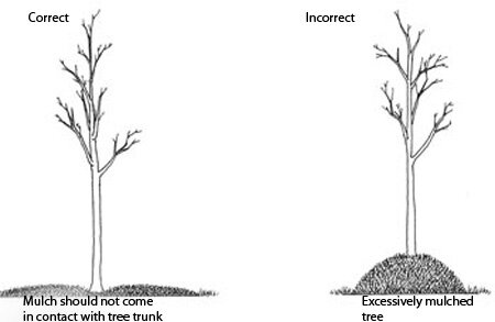 Mulch Diagram.jpg
