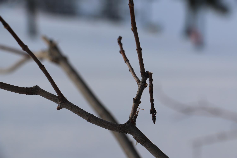 Cold Snap.JPG