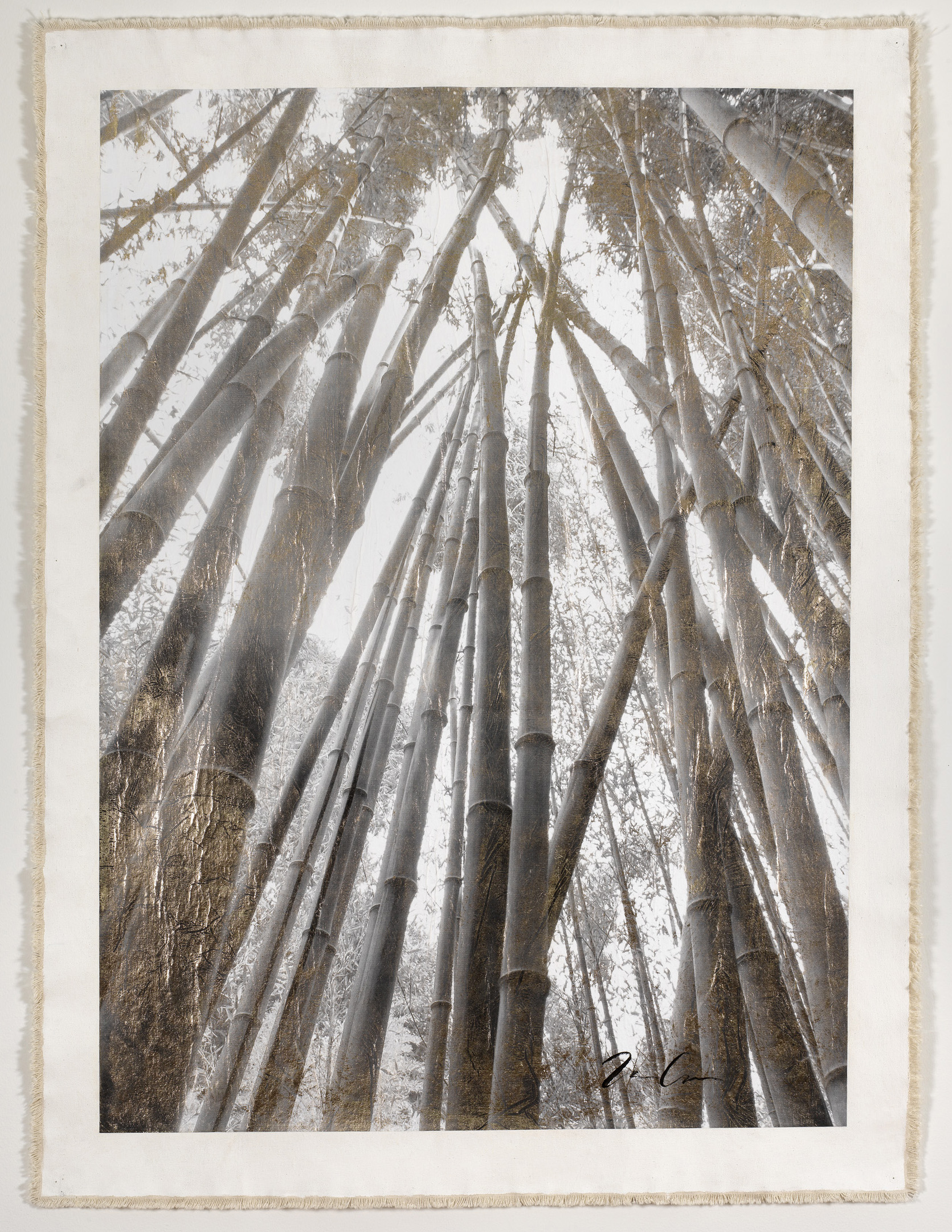 Bamboo Forest Canopy