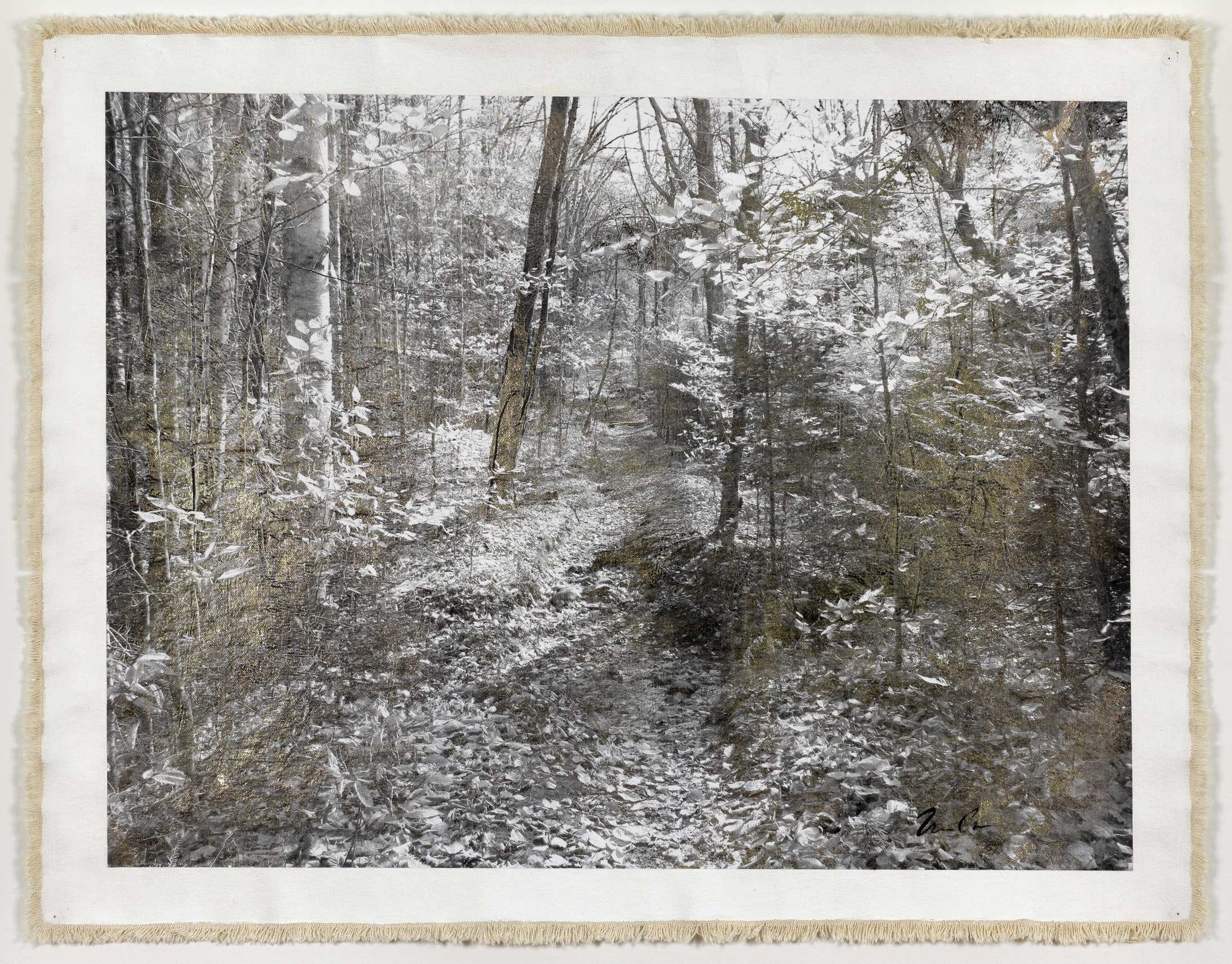 Forest Path