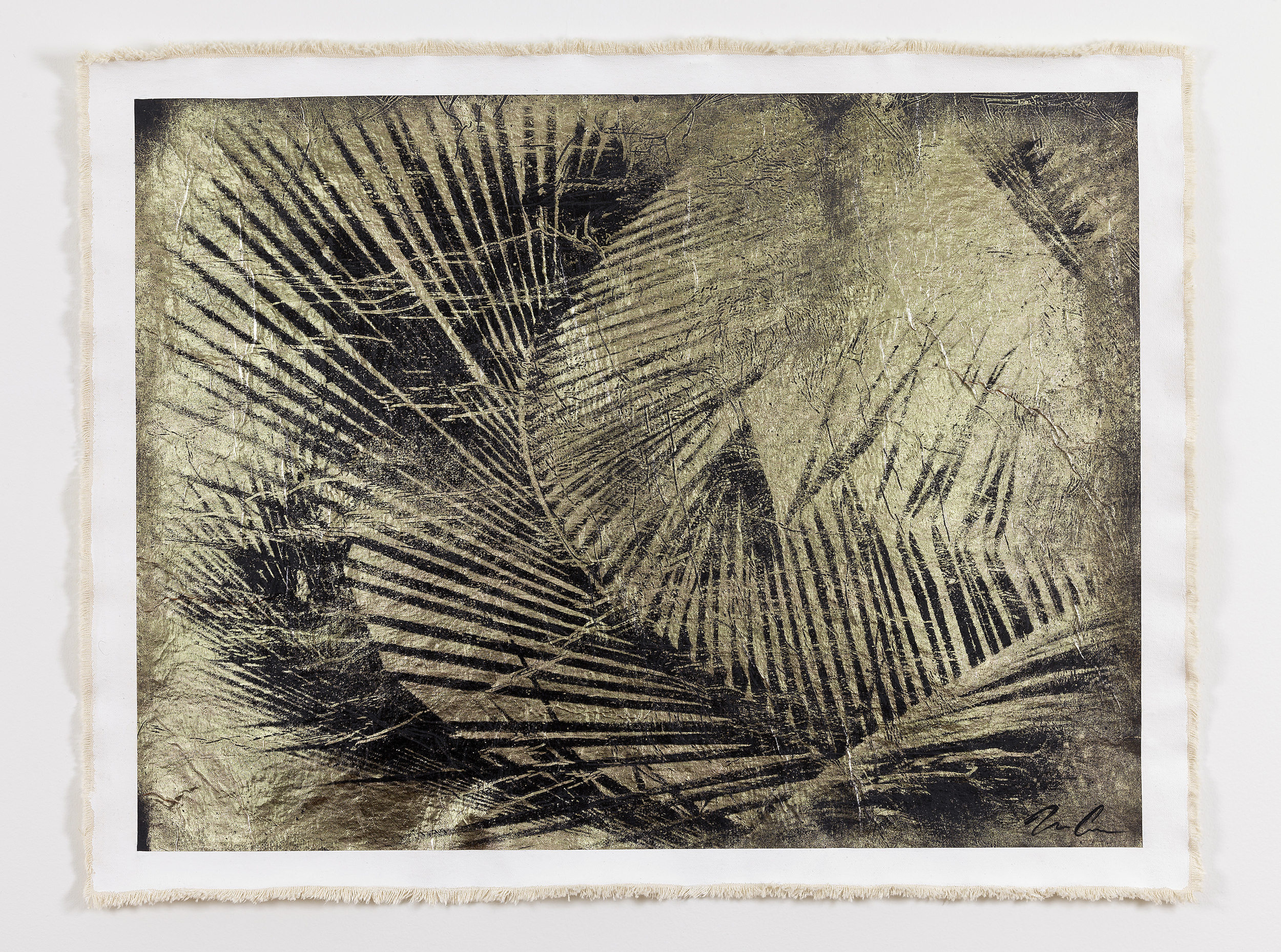 Cuban Palm I, Negative