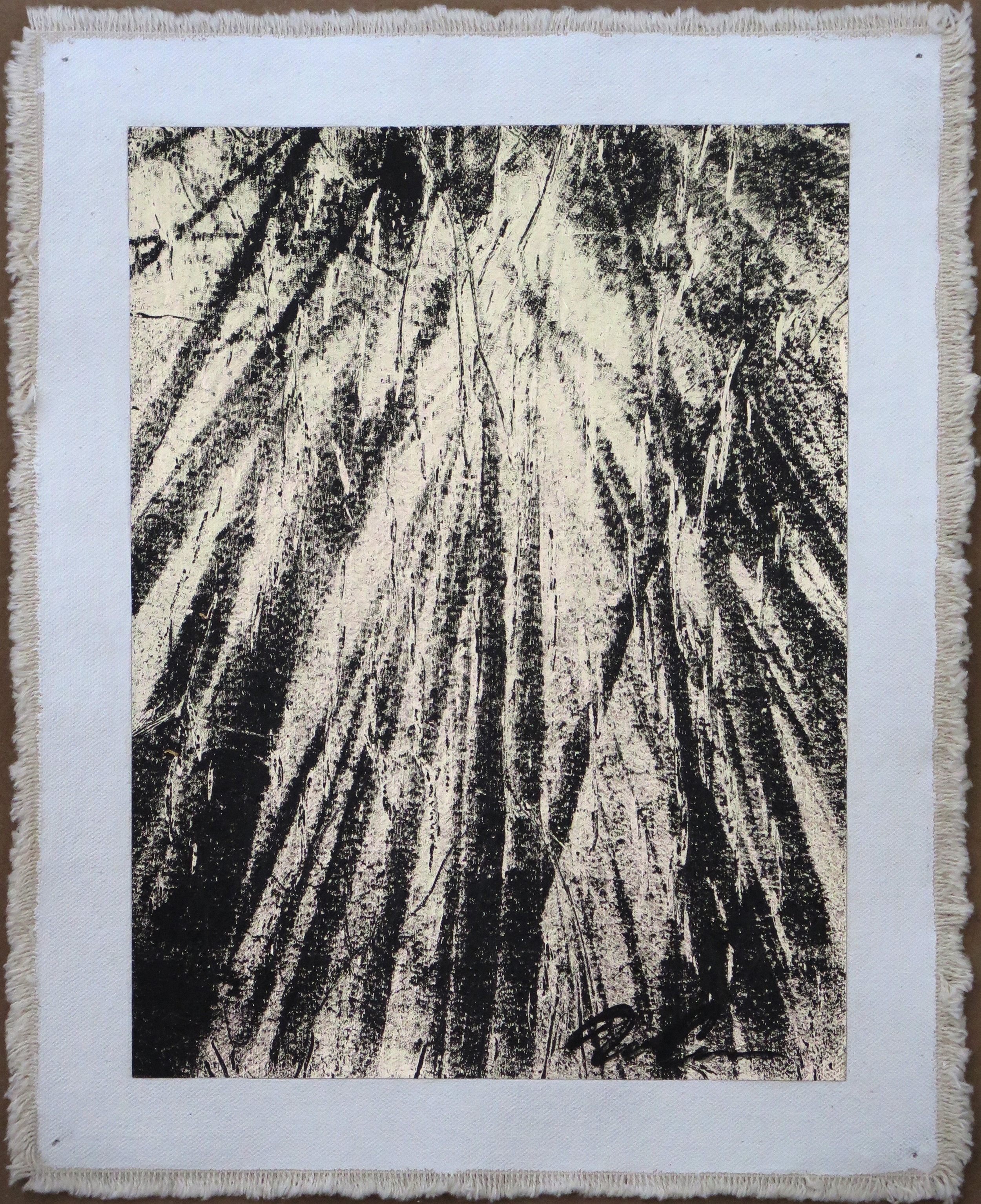 Bamboo Forest Canopy, Negative