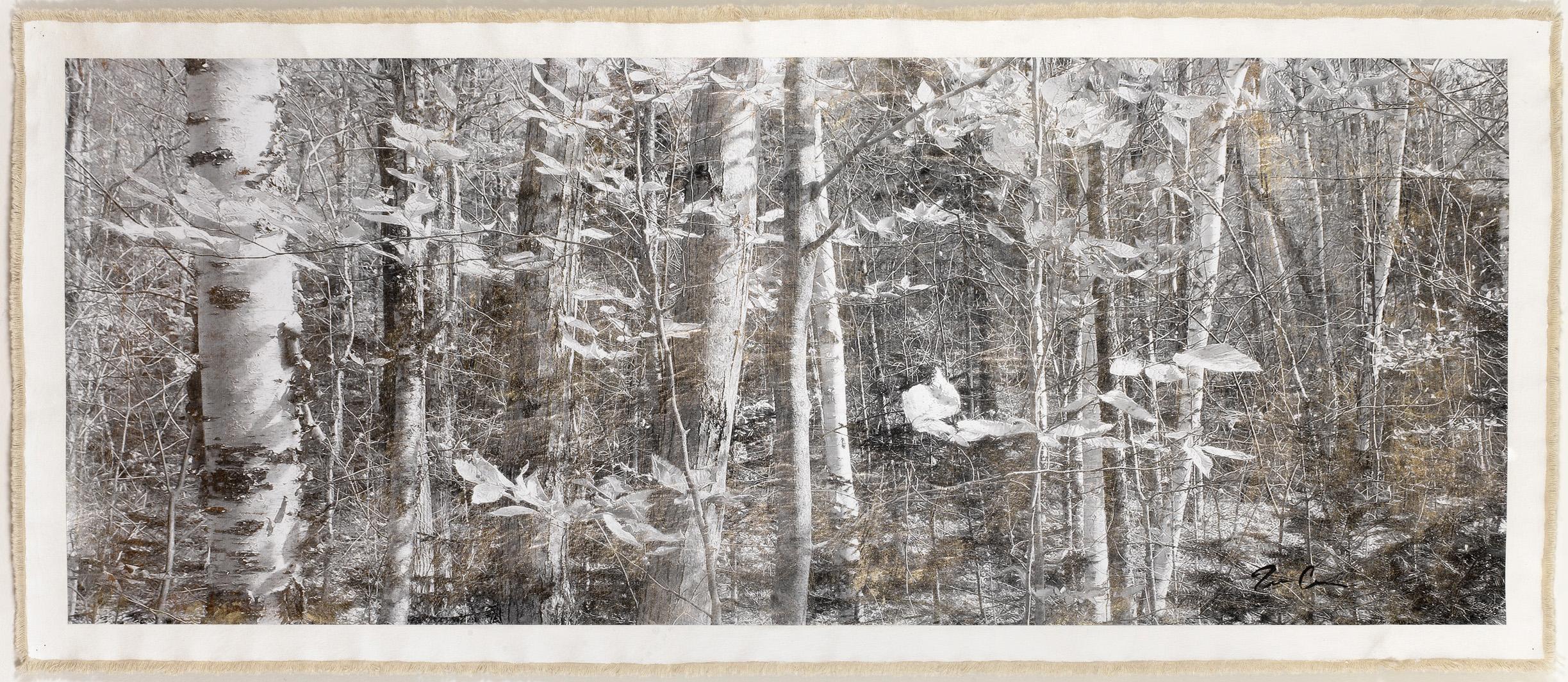 Birch Forest, Mt. Hale