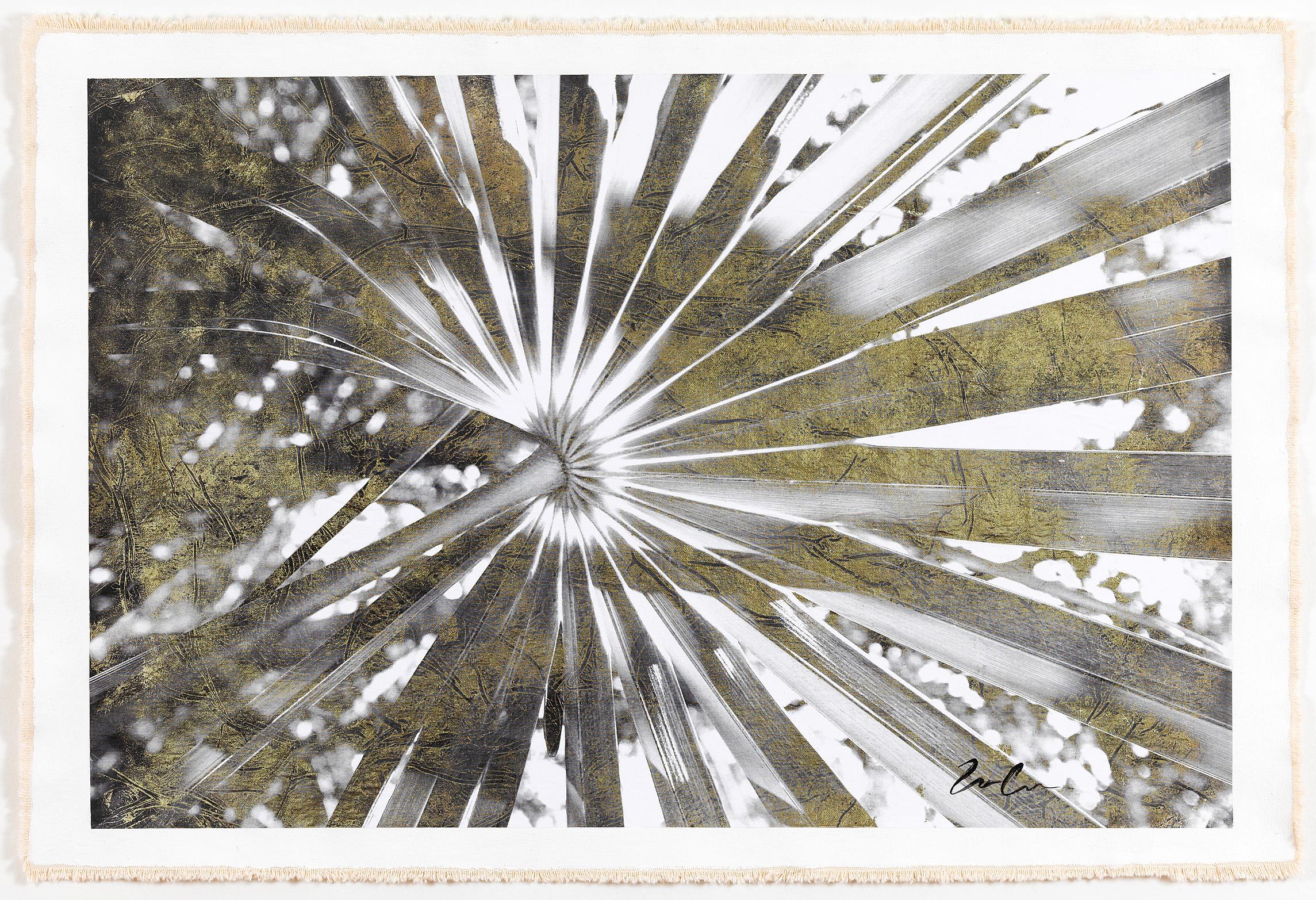 Cocotrina Halesandar, Positive